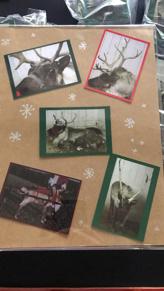 Reindeer Trading Cards Classic Claus